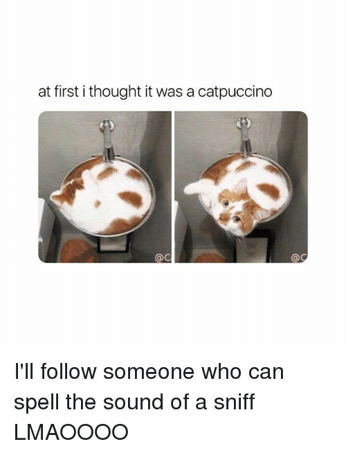 Girl Memes, Thought, and Who: at first i thought it was a catpuccino  @c I'll follow someone who can spell the sound of a sniff LMAOOOO