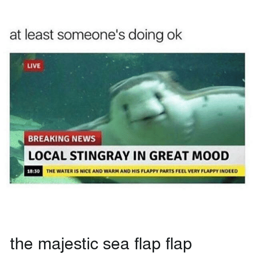 Flappy: at least someone's doing ok  LIVE  BREAKING NEWS  LOCAL STINGRAY IN GREAT MOOD  18:30  THE WATER IS NICE AND WARM AND HIS FLAPPY PARTS FEEL VERY FLAPPY INDEED the majestic sea flap flap