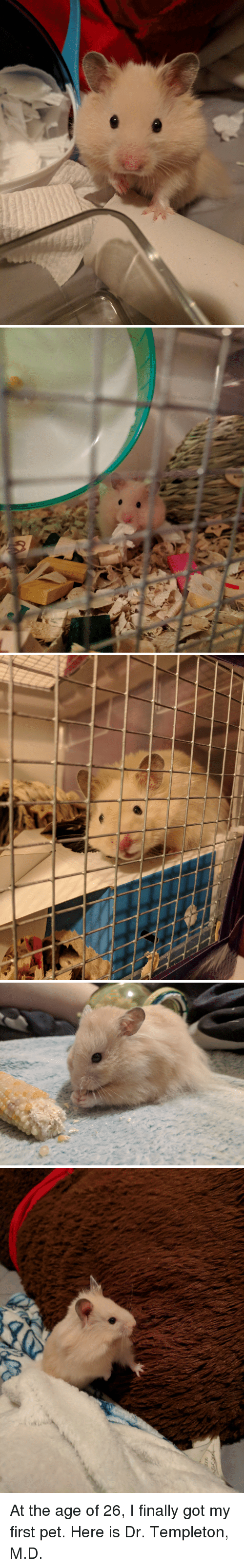 Got, Pet, and First: At the age of 26, I finally got my first pet. Here is Dr. Templeton, M.D.