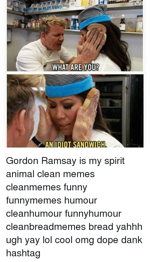 Clean Memes: at  WHAT ARE YOU!  AN IDIOT SANDWICH Gordon Ramsay is my spirit animal clean memes cleanmemes funny funnymemes humour cleanhumour funnyhumour cleanbreadmemes bread yahhh ugh yay lol cool omg dope dank hashtag