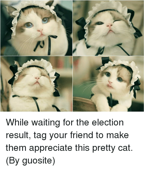 Cats, Dank, and Friends: AT While waiting for the election result, tag your friend to make them appreciate this pretty cat. (By guosite)