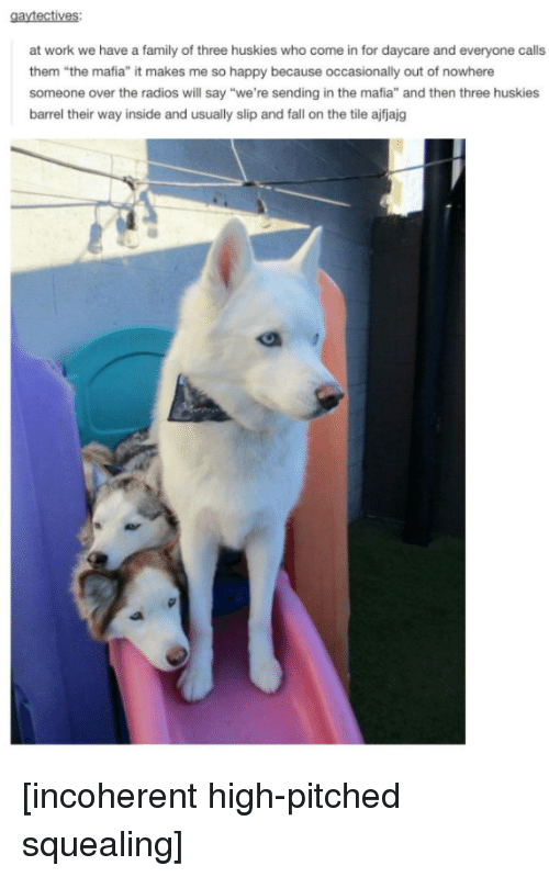 """Fall, Family, and Work: at work we have a family of three huskies who come in for daycare and everyone calls  them """"the mafia"""" it makes me so happy because occasionally out of nowhere  someone over the radios will say """"we're sending in the mafia"""" and then three huskies  barrel their way inside and usually slip and fall on the tile ajfjajg [incoherent high-pitched squealing]"""