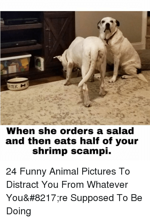Funny, Animal, and Pictures: ATER  When she orders a salad  and then eats half of your  shrimp scampi. 24 Funny Animal Pictures To Distract You From Whatever You're Supposed To Be Doing