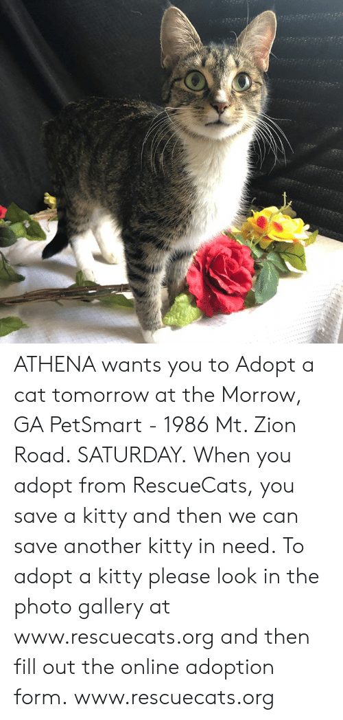 Memes, Athena, and Petsmart: ATHENA wants you to Adopt a cat tomorrow at the Morrow, GA PetSmart - 1986 Mt. Zion Road. SATURDAY.  When you adopt from RescueCats, you save a kitty and then we can save another kitty in need. To adopt a kitty please look in the photo gallery at www.rescuecats.org and then fill out the online adoption form.  www.rescuecats.org