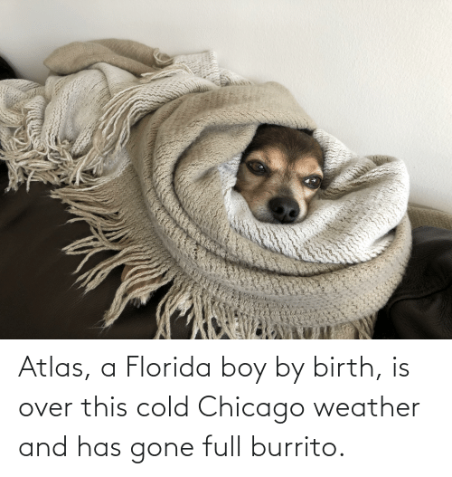 over-this: Atlas, a Florida boy by birth, is over this cold Chicago weather and has gone full burrito.