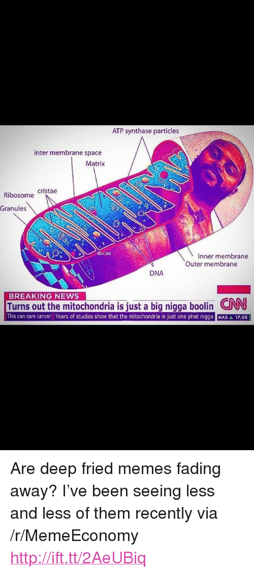 """phat: ATP synthase particles  inter membrane space  Matrix  Ribosome Cristae  Granules  Dur.sis  Inner membrane  Outer membrane  DNA  BREAKING NEWS  Turns out the mitochondria is iust a big nigga boolin CNN  This can cure cancer Years of studies show that the mitochondria is just one phat nigga NAS A 17.0S <p>Are deep fried memes fading away? I've been seeing less and less of them recently via /r/MemeEconomy <a href=""""http://ift.tt/2AeUBiq"""">http://ift.tt/2AeUBiq</a></p>"""