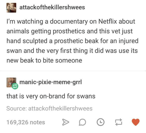 Animals, Meme, and Netflix: attackofthekillershwees  I'm watching a documentary on Netflix about  animals getting prosthetics and this vet just  hand sculpted a prosthetic beak for an injured  swan and the very first thing it did was use its  new beak to bite someone  manic-pixie-meme-grrl  that is very on-brand for swans  Source: attackofthekillershwees  169,326 notes