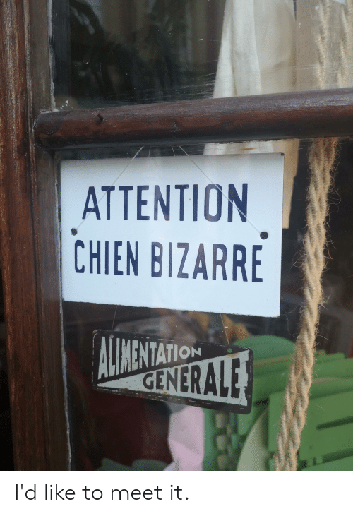 Bizarre, Like, and Attention: ATTENTION  CHIEN BIZARRE  MENTATION  GENERALE I'd like to meet it.