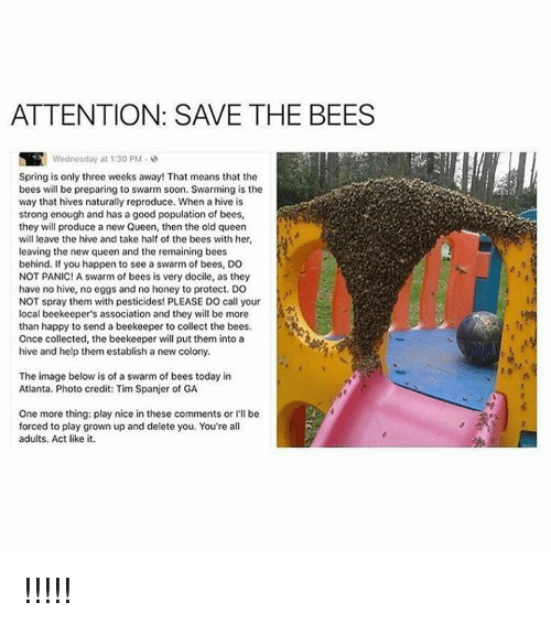 Memes, Collective, and 🤖: ATTENTION: SAVE THE BEES  Spring is only three weeks away! That means that the  bees will be preparing to swarm soon. Swarming is the  way that hives naturally reproduce. When a hive is  strong enough and has a good population of bees  they will produce a new Queen, then the old queen  will leave the hive and take half of the bees with her  leaving the new queen and the remaining bees  behind. If you happen to see a swarm of bees, DO  NOT PANIC! A swarm of bees is very docile, as they  have no hive, no eggs and no honey to protect. DO  NOT spray them with pesticides! PLEASE DO call your  local beekeeper's association and they will be more  than happy to send a beekeeper to collect the bees  Once collected, the beekeeper will put them into a  hive and help them establish a new colony  The image below is of a swarm of bees today in  Atlanta. Photo credit: Tim Spanjer of GA  One more thing: play nice in these comments or l'll be  forced to play grown up and delete you, You're al  adults. Act like it. !!!!!