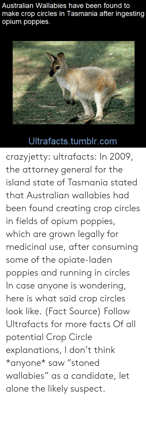 """Poppies: Australian Wallabies have been found to  make crop circles in Tasmania after ingesting  opium poppies  Ultrafacts.tumblr.com crazyjetty:  ultrafacts:    In 2009, the attorney general for the island state of Tasmania stated that Australian wallabies had been found creating crop circles in fields of opium poppies, which are grown legally for medicinal use, after consuming some of the opiate-laden poppies and running in circles     In case anyone is wondering, here is what said crop circles look like.   (Fact Source) Follow Ultrafacts for more facts  Of all potential Crop Circle explanations, I don't think *anyone* saw """"stoned wallabies"""" as a candidate, let alone the likely suspect."""