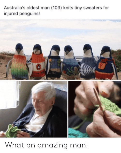 Penguins: Australia's oldest man (109) knits tiny sweaters for  injured penguins! What an amazing man!