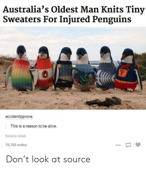 Penguins: Australia's Oldest Man Knits Tiny  Sweaters For Injured Penguins  0  accidenttpprone:  This is a reason to be alive.  Source anus  70,750 notes  tl Don't look at source