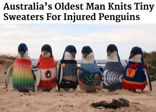Penguins: Australia's Oldest Man Knits Tiny  Sweaters For Injured Penguins