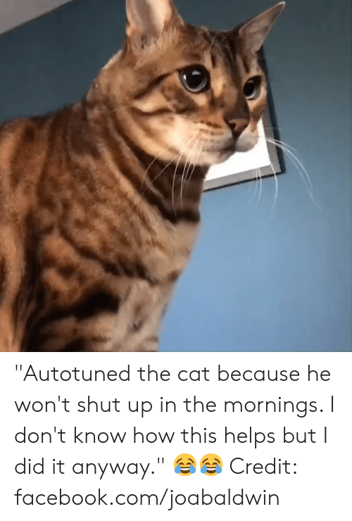 """Dank, Facebook, and Shut Up: """"Autotuned the cat because he won't shut up in the mornings. I don't know how this helps but I did it anyway."""" 😂😂  Credit: facebook.com/joabaldwin"""