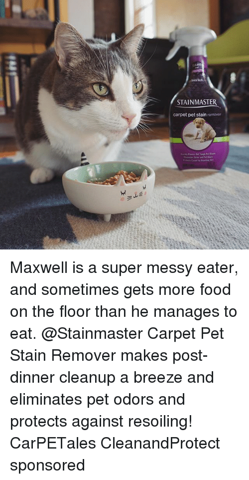 Staine: avisi  STAINMASTER  carpet pet stain remover Maxwell is a super messy eater, and sometimes gets more food on the floor than he manages to eat. @Stainmaster Carpet Pet Stain Remover makes post-dinner cleanup a breeze and eliminates pet odors and protects against resoiling! CarPETales CleanandProtect sponsored
