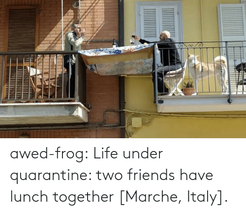 Under: awed-frog:  Life under quarantine: two friends have lunch together [Marche, Italy].