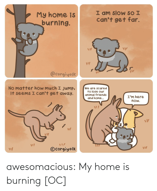 Home: awesomacious:  My home is burning [OC]