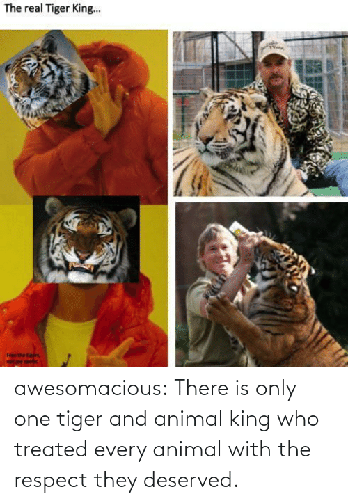 respect: awesomacious:  There is only one tiger and animal king who treated every animal with the respect they deserved.
