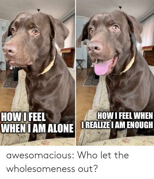 out: awesomacious:  Who let the wholesomeness out?