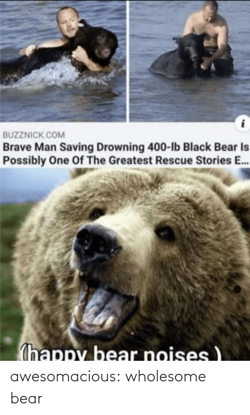 Bear: awesomacious:  wholesome bear