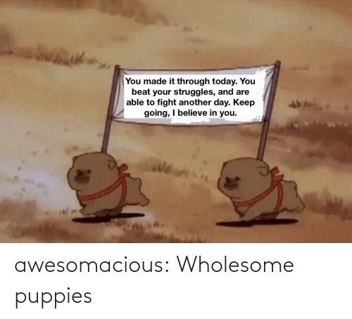 Puppies: awesomacious:  Wholesome puppies