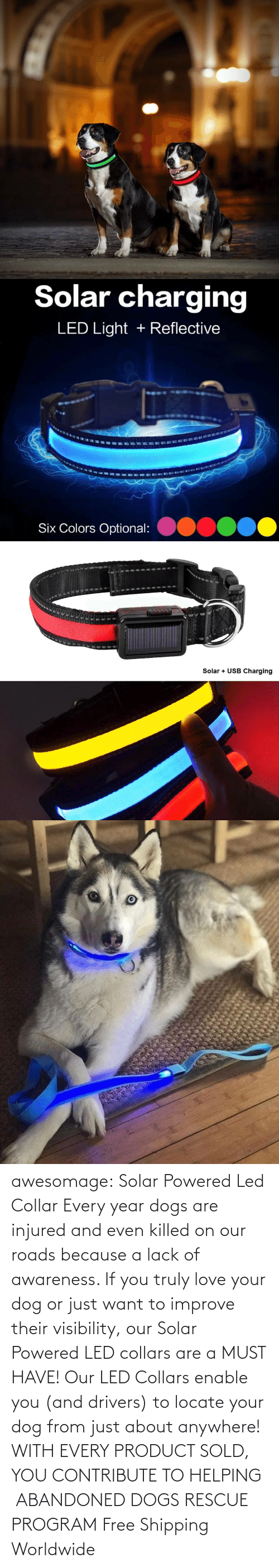 product: awesomage: Solar Powered Led Collar   Every year dogs are injured and even killed on our roads because a lack of awareness. If you truly love your dog or just want to improve their visibility, our Solar Powered LED collars are a MUST HAVE!   Our LED Collars enable you (and drivers) to locate your dog from just about anywhere!     WITH EVERY PRODUCT SOLD, YOU CONTRIBUTE TO HELPING  ABANDONED DOGS RESCUE PROGRAM     Free Shipping Worldwide