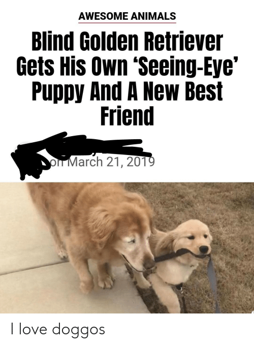 Animals, Best Friend, and Love: AWESOME ANIMALS  Blind Golden Retriever  Gets His Own 'Seeing-Eye'  Puppy And A New Best  Friend  oIT March 21, 201 I love doggos