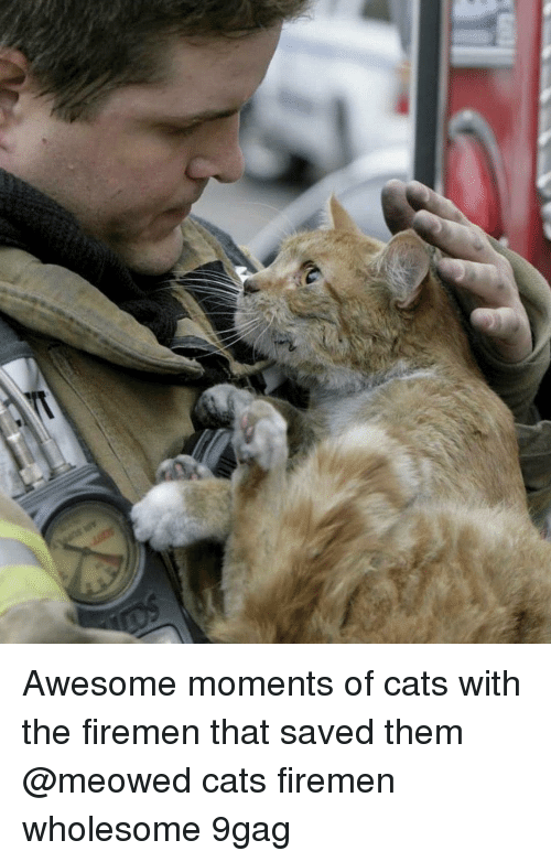 9gag, Cats, and Memes: Awesome moments of cats with the firemen that saved them @meowed cats firemen wholesome 9gag