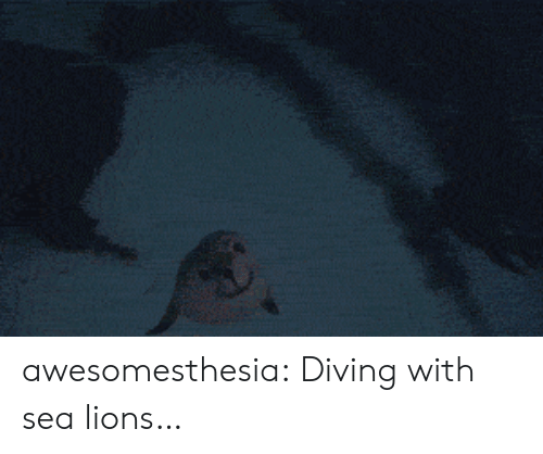 Diving: awesomesthesia:  Diving with sea lions…