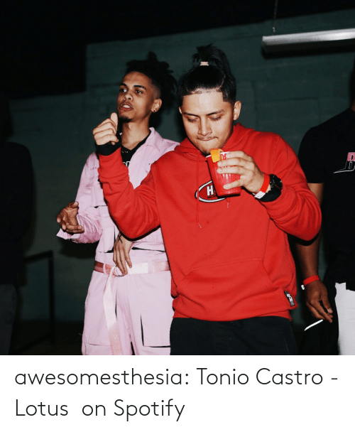 Track: awesomesthesia:  Tonio Castro - Lotus   on Spotify