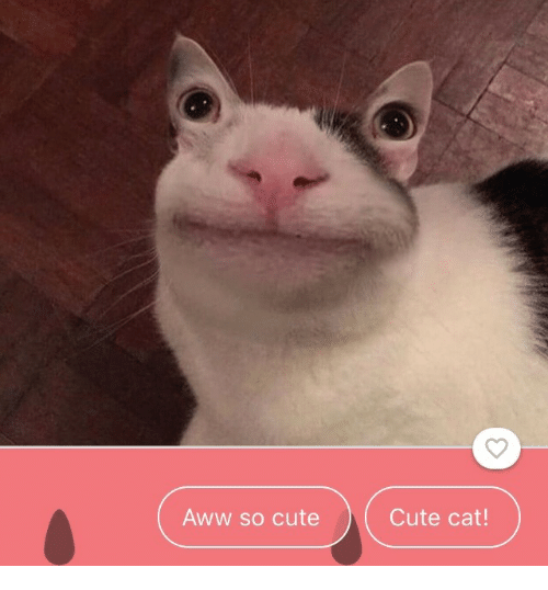 Aww, Cute, and Cat: Aww so cute  Cute cat!