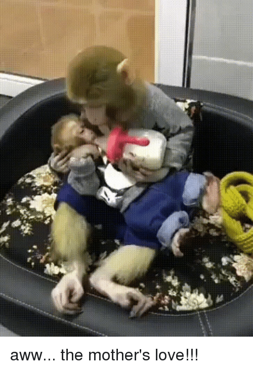 Aww, Love, and Mothers: aww... the mother's love!!!