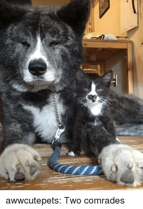 Tumblr, Blog, and Http: awwcutepets:  Two comrades