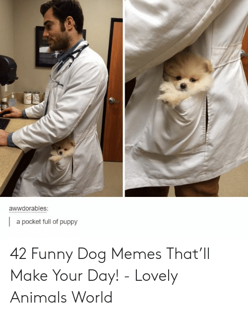 Dog Memes: awwdorables:  a pocket full of puppy 42 Funny Dog Memes That'll Make Your Day! - Lovely Animals World