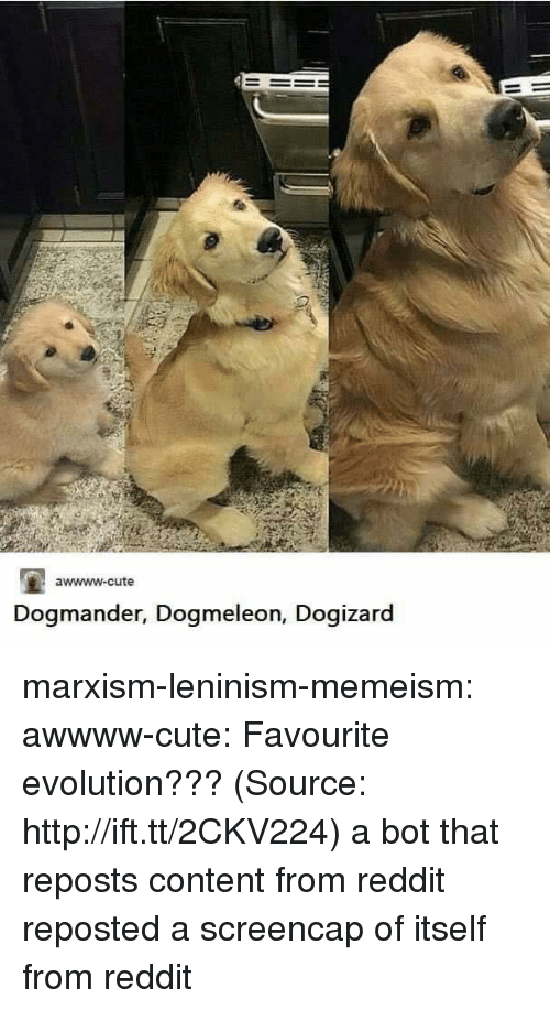 Cute, Reddit, and Target: awwww-cute  Dogmander, Dogmeleon, Dogiza  rd marxism-leninism-memeism:  awwww-cute:  Favourite evolution??? (Source: http://ift.tt/2CKV224)  a bot that reposts content from reddit reposted a screencap of itself from reddit
