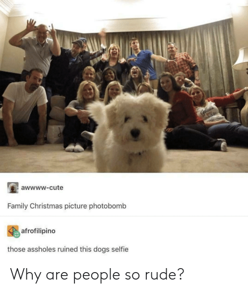 so rude: awwww-cute  Family Christmas picture photobomb  afrofilipino  those assholes ruined this dogs selfie Why are people so rude?