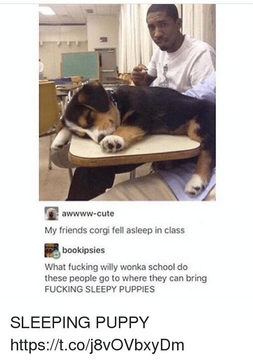 corgy: awwww-cute  My friends corgi fell asleep in class  bookipsies  What fucking willy wonka school do  these people go to where they can bring  FUCKING SLEEPY PUPPIES SLEEPING PUPPY https://t.co/j8vOVbxyDm