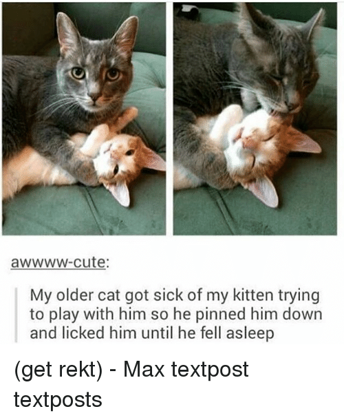 Textposts: awwww-cute  My older cat got sick of my kitten trying  to play with him so he pinned him down  and licked him until he fell asleep (get rekt) - Max textpost textposts