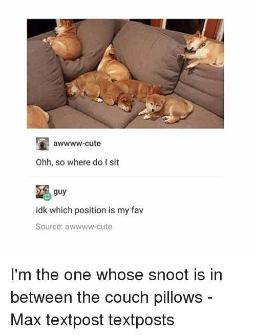 Cute, Memes, and Couch: awwww-cute  Ohh, so where do I sit  guy  idk which position is my fav  Source: awwww cute I'm the one whose snoot is in between the couch pillows - Max textpost textposts