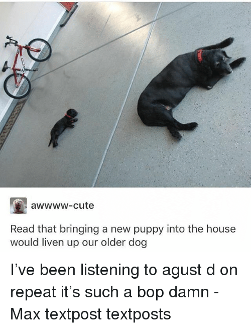 Cute, Memes, and House: awwww-cute  Read that bringing a new puppy into the house  would liven up our older dog I've been listening to agust d on repeat it's such a bop damn - Max textpost textposts