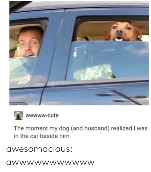 Cute, Tumblr, and Blog: awwww-cute  The moment my dog (and husband) realized I was  in the car beside him awesomacious:  awwwwwwwwwww