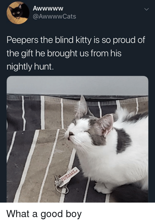 Nightly: @AwwwwCats  Peepers the blind kitty is so proud of  the gift he brought us from hi:s  nightly hunt. What a good boy