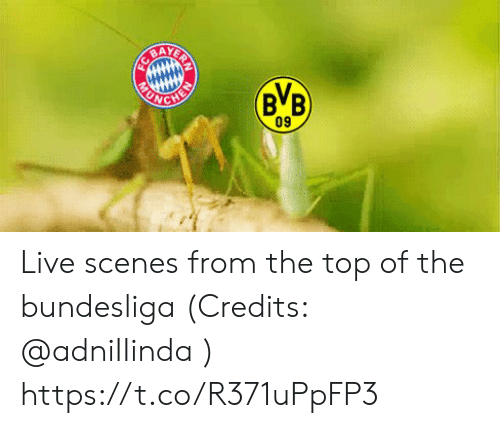 Memes, Live, and 🤖: AY  BB  ONG  09 Live scenes from the top of the bundesliga (Credits: @adniIIinda )  https://t.co/R371uPpFP3