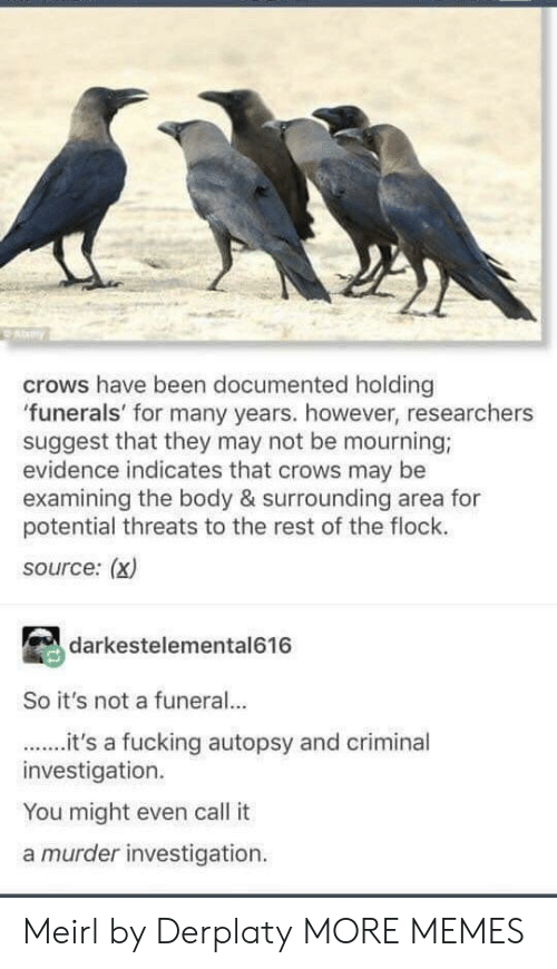 mourning: ay  crows have been documented holding  funerals' for many years. however, researchers  suggest that they may not be mourning;  evidence indicates that crows may be  examining the body & surrounding area for  potential threats to the rest of the flock.  source: (x)  darkestelemental616  So it's not a funeral..  it's a fucking autopsy and criminal  investigation.  You might even call it  a murder investigation Meirl by Derplaty MORE MEMES