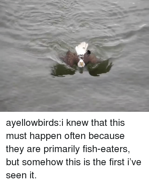 Target, Tumblr, and Blog: ayellowbirds:i knew that this must happen often because they are primarily fish-eaters, but somehow this is the first i've seen it.