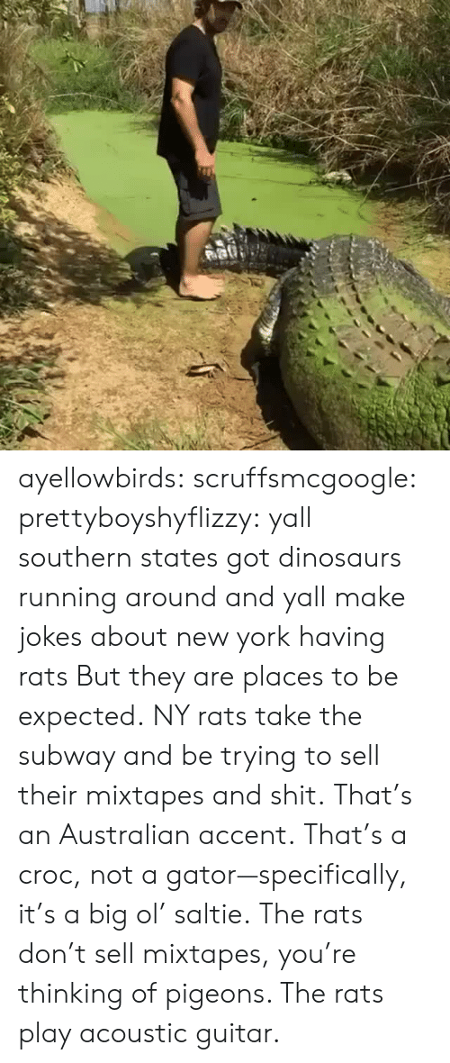 croc: ayellowbirds: scruffsmcgoogle:  prettyboyshyflizzy: yall southern states got dinosaurs running around and yall make jokes about new york having rats  But they are places to be expected. NY rats take  the subway and be trying to sell their mixtapes and shit.  That's an Australian accent. That's a croc, not a gator—specifically, it's a big ol' saltie. The rats don't sell mixtapes, you're thinking of pigeons. The rats play acoustic guitar.
