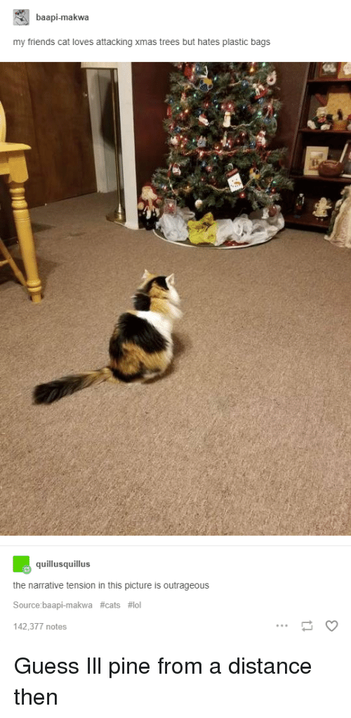 Broomstick: baapi-makwa  my friends cat loves attacking xmas trees but hates plastic bags  quillusquillus  the narrative tension in this picture is outrageous  Source:baapi-makwa #cats #101  142,377 notes Guess Ill pine from a distance then