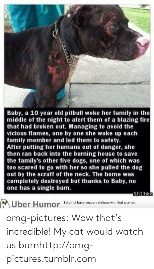 Blazing: Baby, a 10 year old pitbull woke her family in the  middle of the night to alert them of a blazing fire  that had broken out. Managing to avoid the  vicious flames, one by one she woke up each  family member and led them to safety.  After putting her humans out of danger, she  then ran back into the burning house to save  the family's other five dogs, one of which was  too scared to go with her so she pulled the dog  out by the scruff of the neck. The home was  completely destroyed but thanks to Baby, no  one has a single burn.  RJ123abc  I did not have sexual relations with that woman.  Uber Humor omg-pictures:  Wow that's incredible! My cat would watch us burnhttp://omg-pictures.tumblr.com