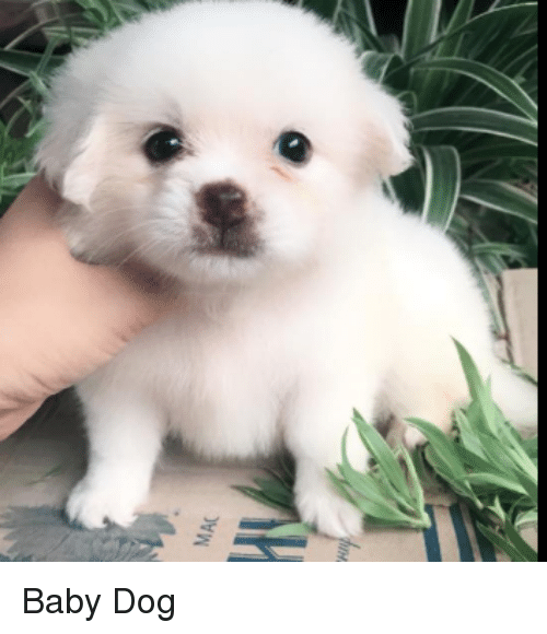 25 Best Memes About Baby Dog Baby Dog Memes