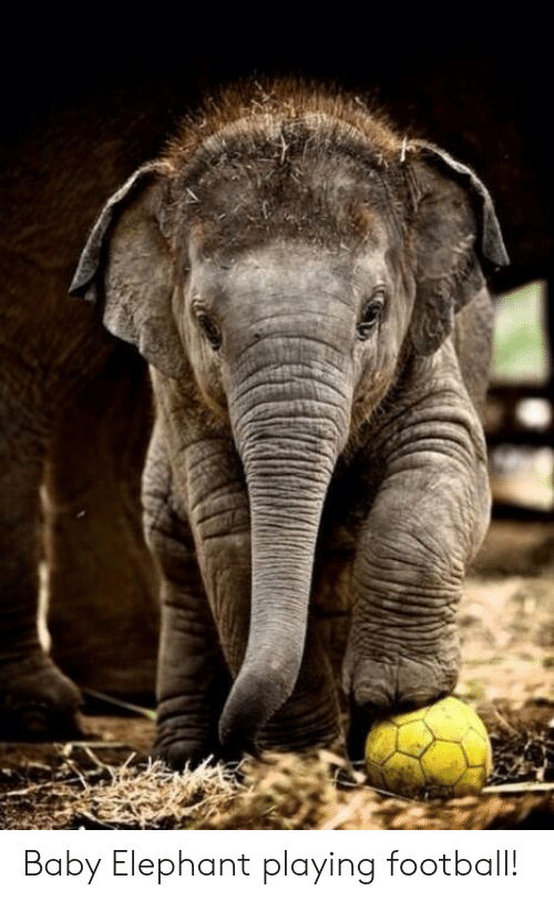 Football, Elephant, and Baby: Baby Elephant playing football!
